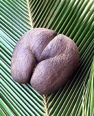 Орехи в жопе