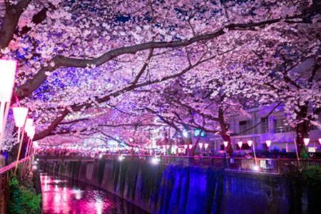 САКУРА. Япония с Востока на Запад и Сикоку