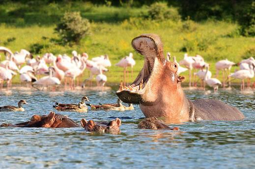 Озеро Найваша, Кения, Национальные парки, Вест Тревел Груп - оператор по странам Африки