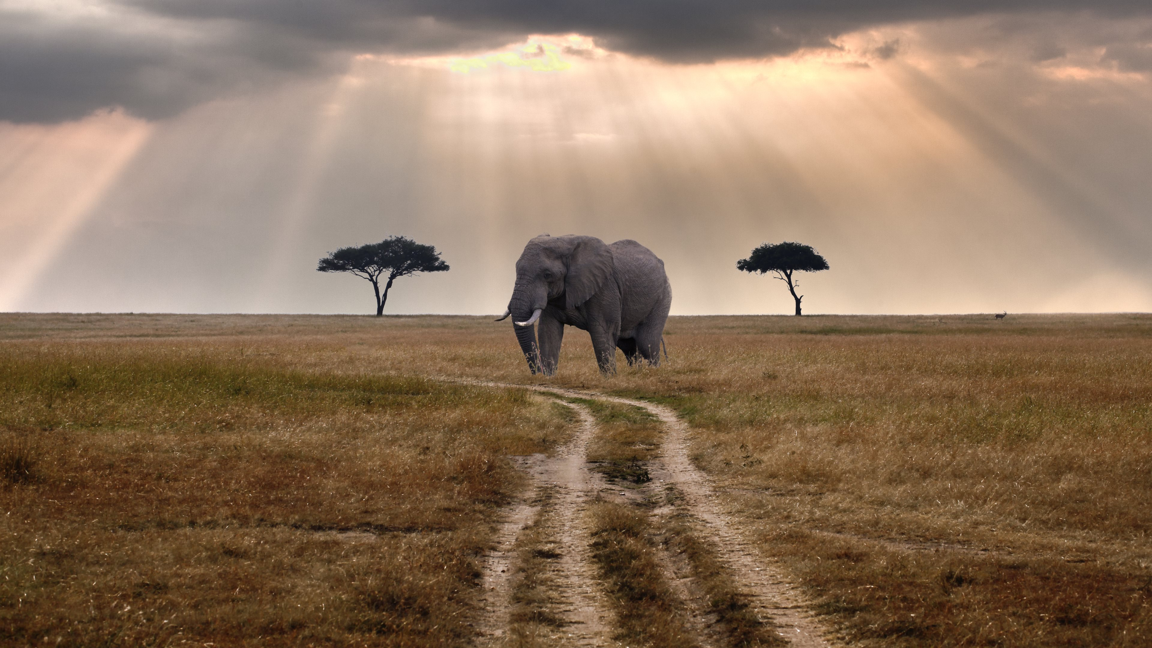 Масаи Мара, Кения, Национальные парки,